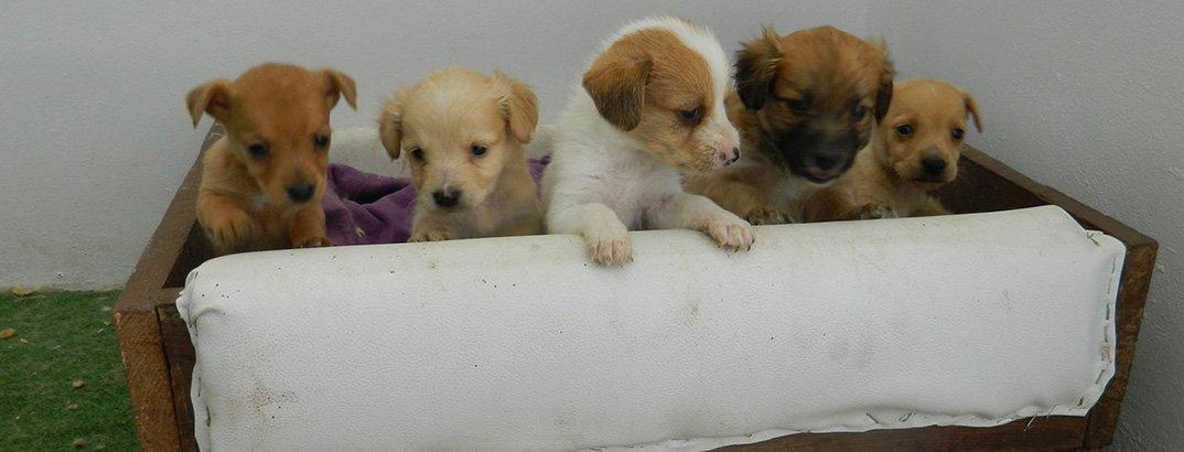 83755430c624 Προσωρινός χώρος κράτησης αδέσποτων σκύλων δήμων Λευκωσίας