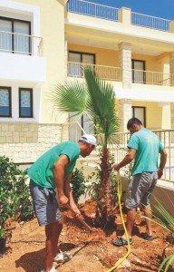 5. replanting_50x70mm