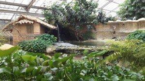 parko krokodeilon