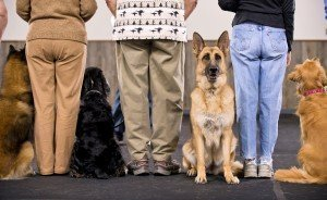 Dogs-Class