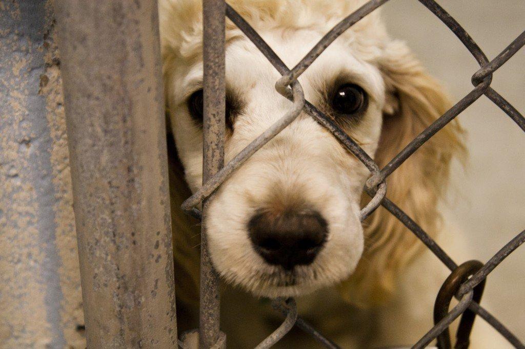 418323460_1367120473-1024x682 Κόμμα για Zώα: Άθλιες συνθήκες σε καταφύγιο σκύλων στα Λεύκαρα
