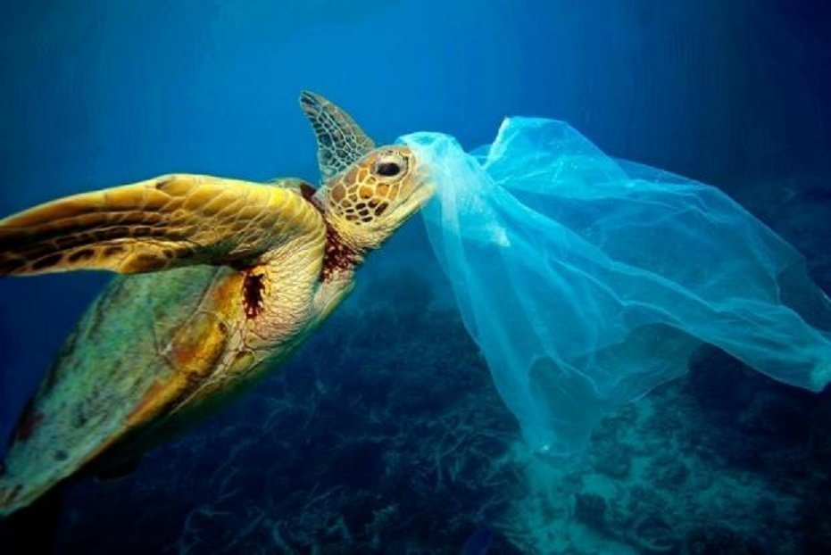 Έρευνα της WWF κρούει τον κώδωνα του κινδύνου για τη θαλάσσια ζωή και το μέλλον της αλιείας και του τουρισμού