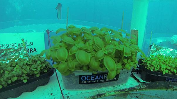 Αποτέλεσμα εικόνας για Ιταλία: Προχωρά η υποβρύχια καλλιέργια τροφίμων