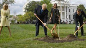 Το δέντρο-σύμβολο της φιλίας των Τραμπ και Μακρόν είναι νεκρό