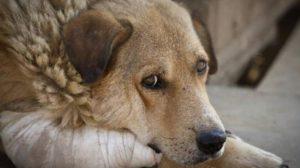 Πώς τα σκυλιά κλέβουν με τα μάτια τους τις καρδιές των ανθρώπων