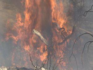 Εκκληση Αστυνομίας προς κοινό να αποφεύγει τη μετάβαση στη Λάρα λόγω φωτιάς