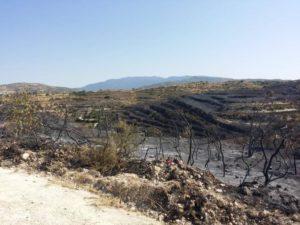 Τεράστιες οι καταστροφές που άφησε η πυρκαγιά στην περιοχή των κρασοχωριών της Λεμεσού