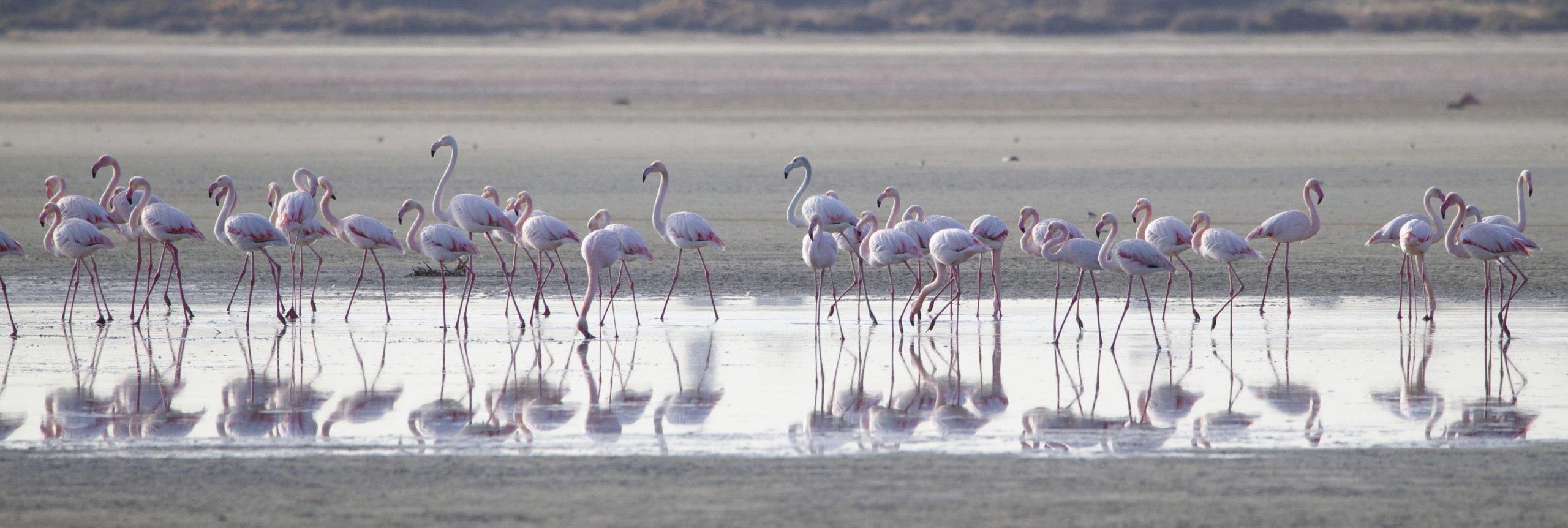 flamingo 13 scaled