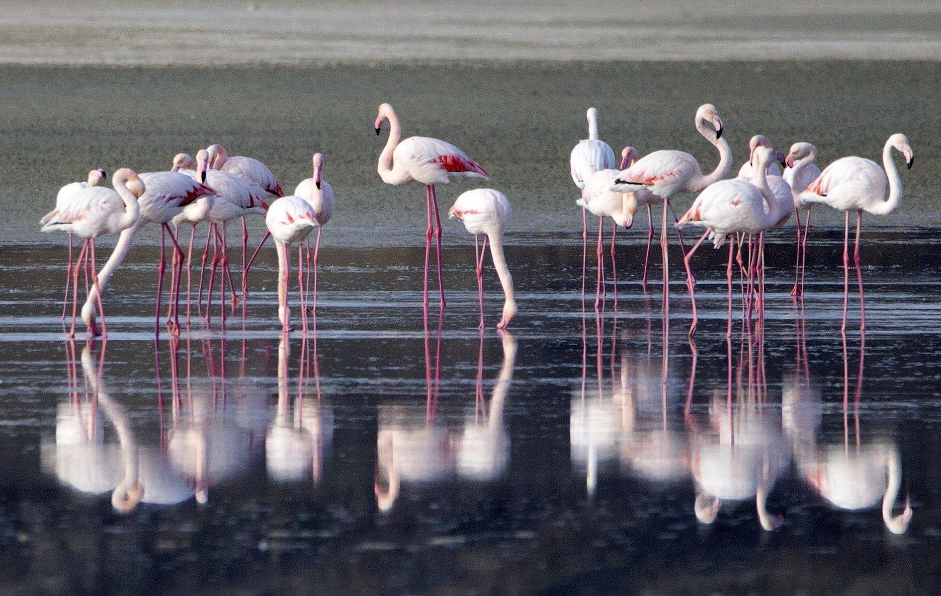 flamingo 14