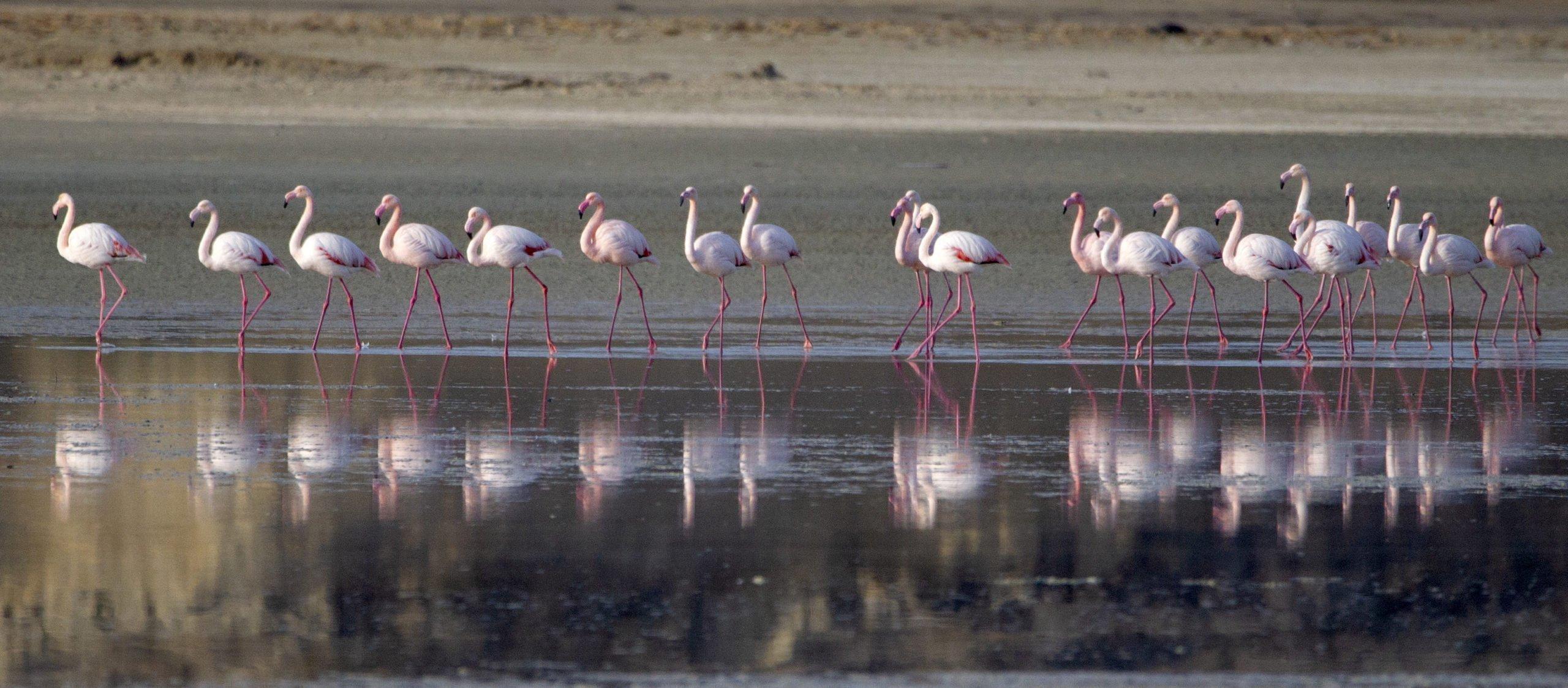 flamingo 15 scaled